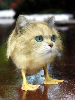 Cat Bird Mobile Wallpaper