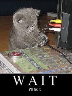 Cat Engnieer Mobile Wallpaper