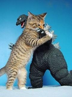 Cat Fight Mobile Wallpaper
