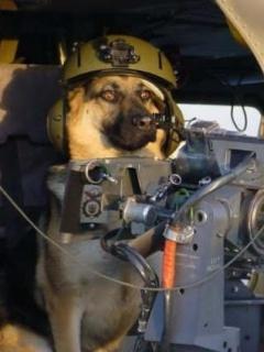 Dog Wid Gun Mobile Wallpaper