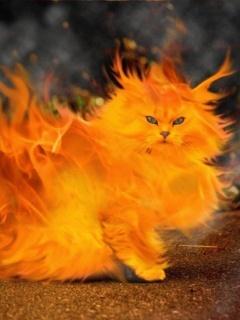 Fire Kitten  Mobile Wallpaper