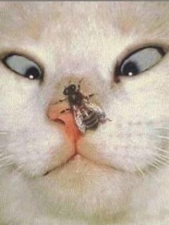 Fuunnyy Cat  Mobile Wallpaper