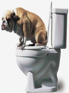 Funny Dog Mobile Wallpaper