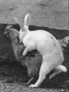 Crazy Bunny Mobile Wallpaper