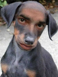 Dog Man  Mobile Wallpaper