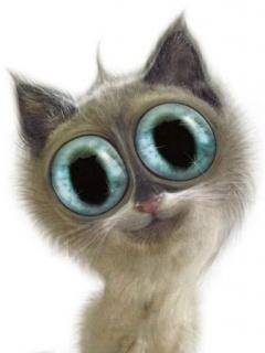 Funny Cat  Mobile Wallpaper