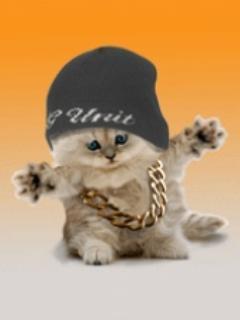 Hip Hop Cat  Mobile Wallpaper