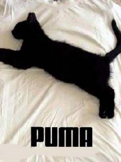 New Puma Mobile Wallpaper