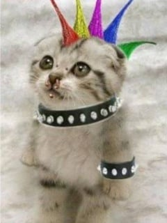Punk Cat Mobile Wallpaper