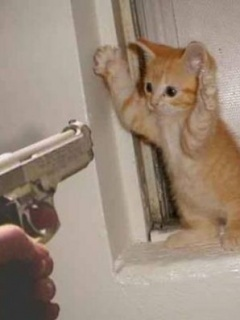 Cat Hand Up Mobile Wallpaper
