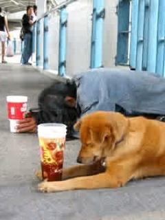 Beggar N Dog Mobile Wallpaper