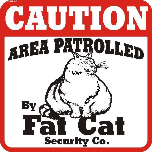 FAT CAT Mobile Wallpaper