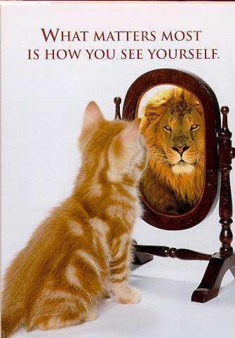 Funny Picture Of Cat Looking In Mirror Mobile Wallpaper