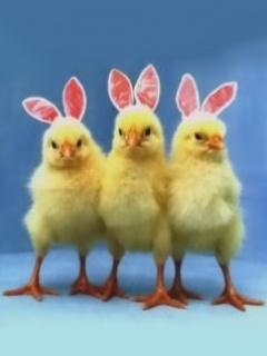 Chicks Mobile Wallpaper
