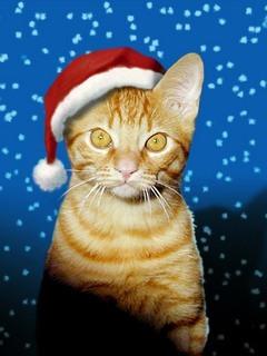 Cat Santaclothd Mobile Wallpaper