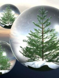 Fir Tree IN The Glass Mobile Wallpaper