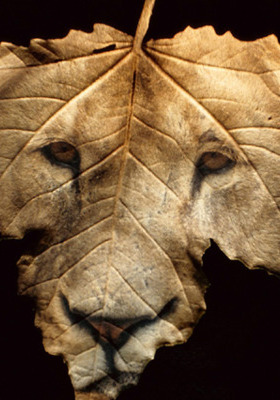 Lion Trees  Mobile Wallpaper