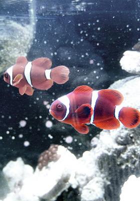 Fish In Water1 Mobile Wallpaper