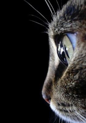 Eye Cat Mobile Wallpaper