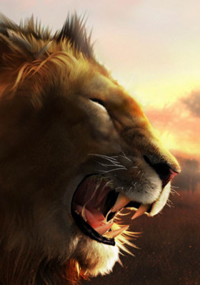 Lion  Mobile Wallpaper