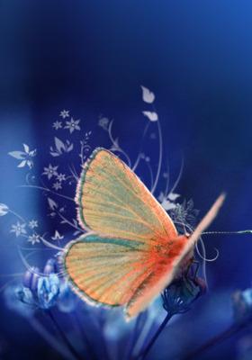Butterflyees Mobile Wallpaper