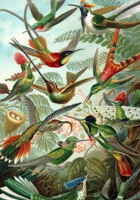 Bird Torch Mobile Wallpaper