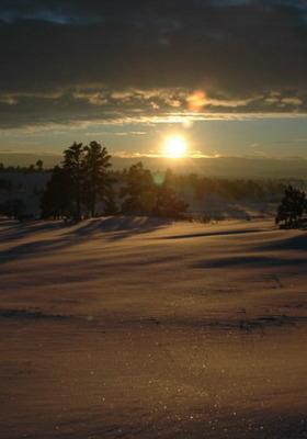 Winter Suns Mobile Wallpaper