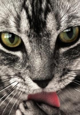 Cat Mobile Wallpaper