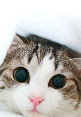 Cat  Mobile Wallpaper