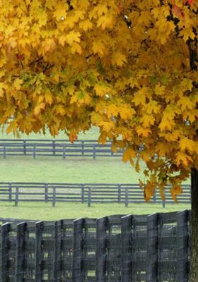 Autumne Mobile Wallpaper