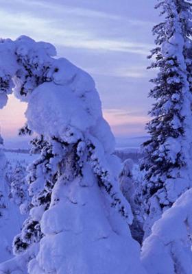 Winter Trees Mobile Wallpaper