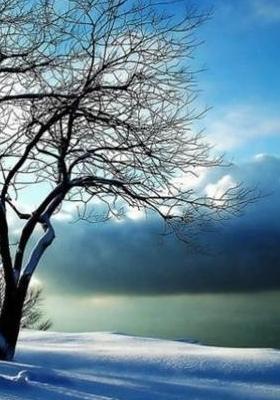 Winter Magic Mobile Wallpaper