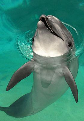 Happy Dolphin Mobile Wallpaper
