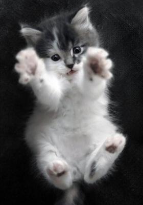 Lil Cat Mobile Wallpaper