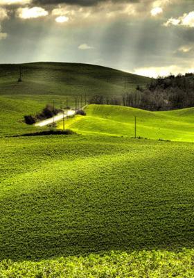 Grass Land Mobile Wallpaper