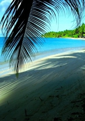 Beach Paradise Mobile Wallpaper