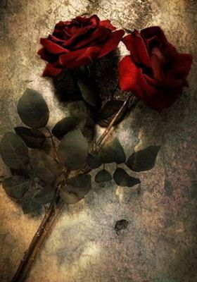 Roses Mobile Wallpaper