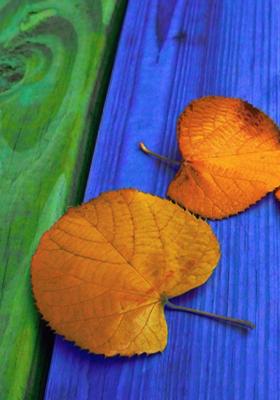 Autumn Golden Leaf Mobile Wallpaper