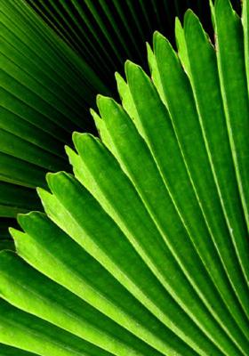 Closeup Leaves Mobile Wallpaper