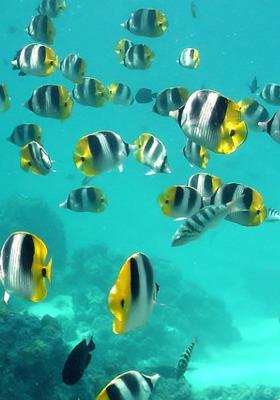 Water Fish  Mobile Wallpaper