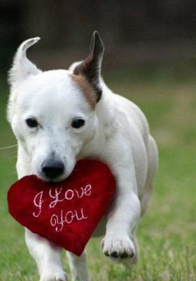 Love Dog Mobile Wallpaper