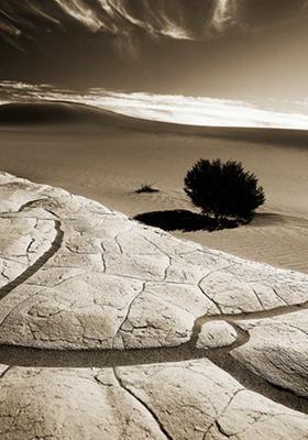 Desert IPhone Wallpaper Mobile Wallpaper
