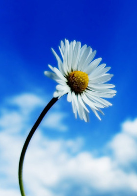 Flower IPhone Mobile Wallpaper