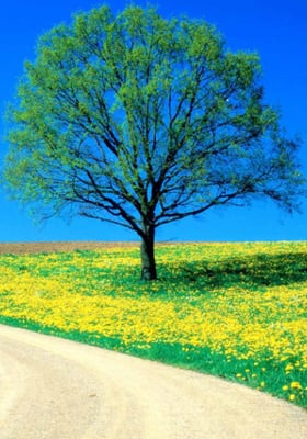 Flowers Spring Road Mobile Wallpaper