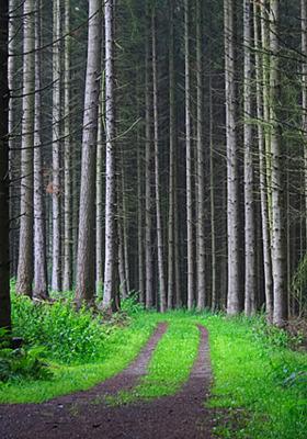Forest Track Mobile Wallpaper