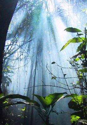 Jungle Dreaming Mobile Wallpaper