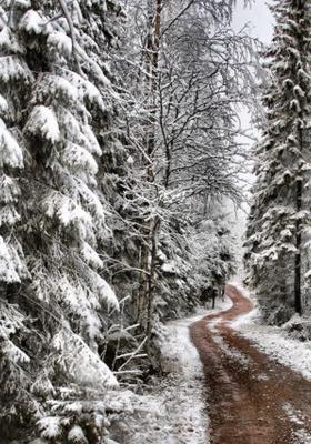 Pine Tree Snow Mobile Wallpaper