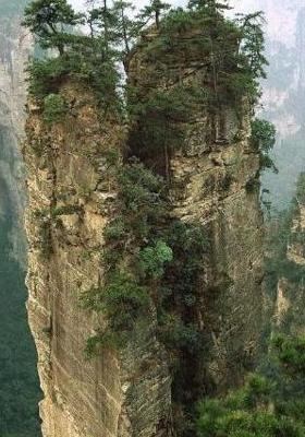 Cliff Trees Mobile Wallpaper