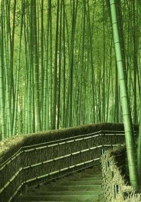 Green Bamboo Mobile Wallpaper