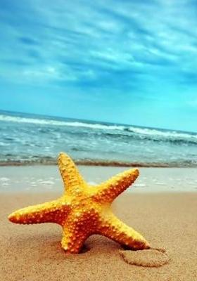 Beach Starfish Mobile Wallpaper